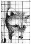 fox stippling