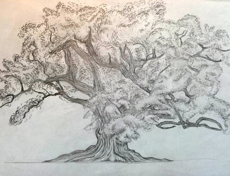 Drawing trees. Exploring tree forms. Art lesson.