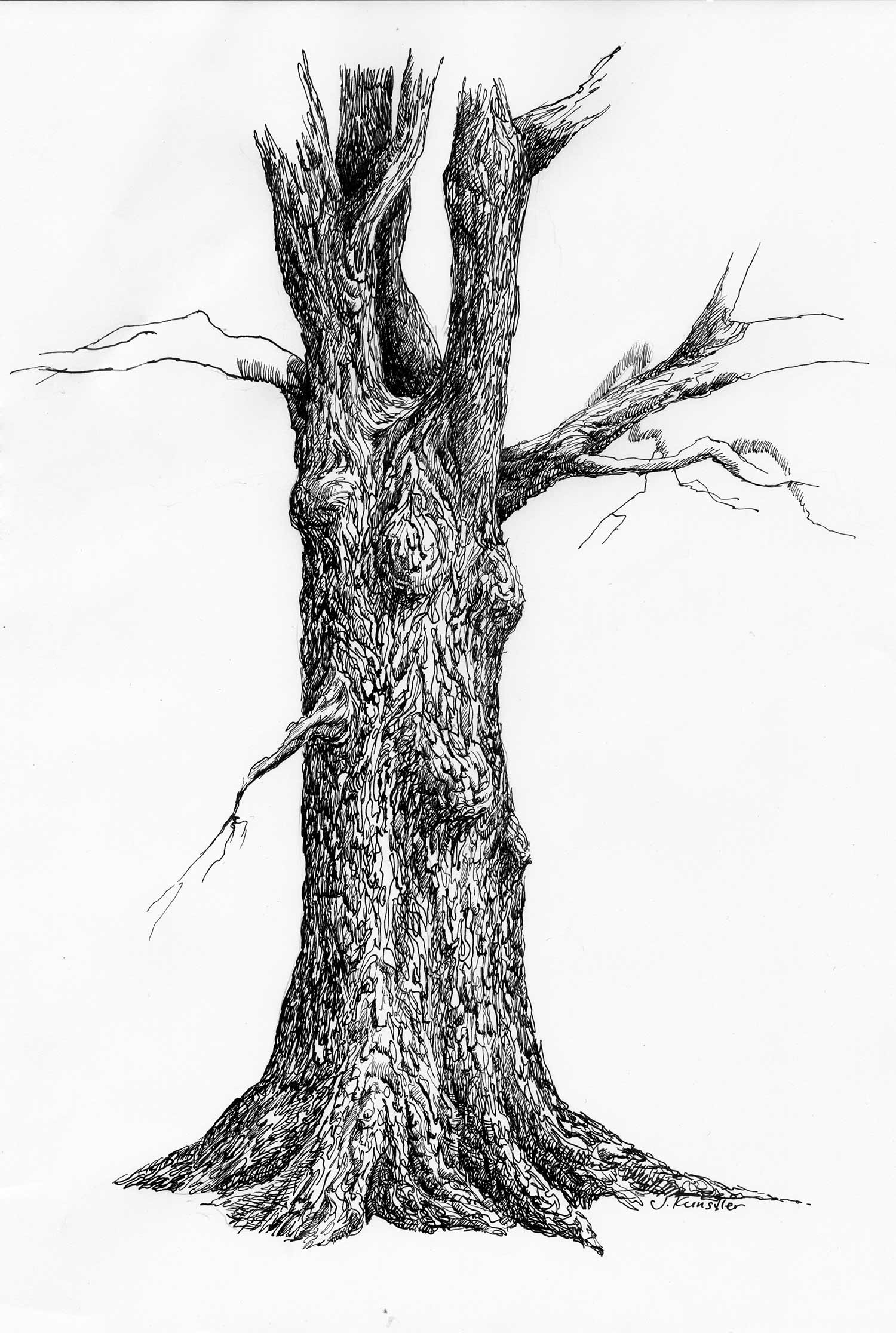 Tree. Pen and ink drawing steps.