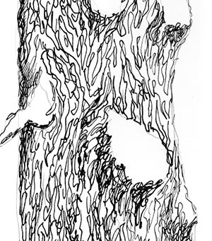 tree pen drawing