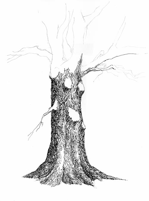 Tree Pen And Ink Drawing Steps